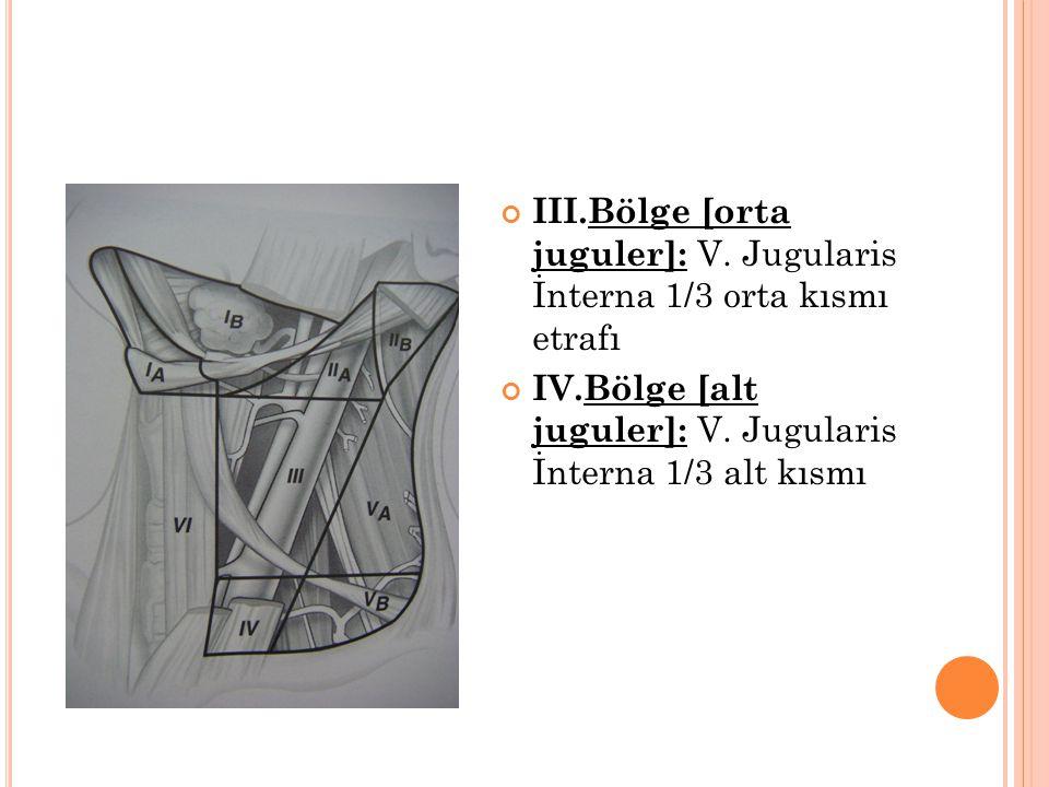 III.Bölge [orta juguler]: V. Jugularis İnterna 1/3 orta kısmı etrafı